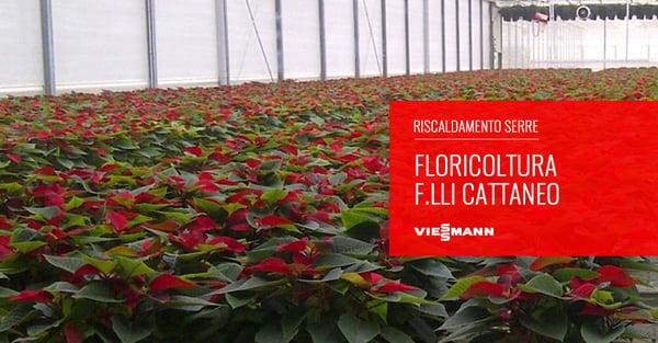 floricoltura-cattaneo