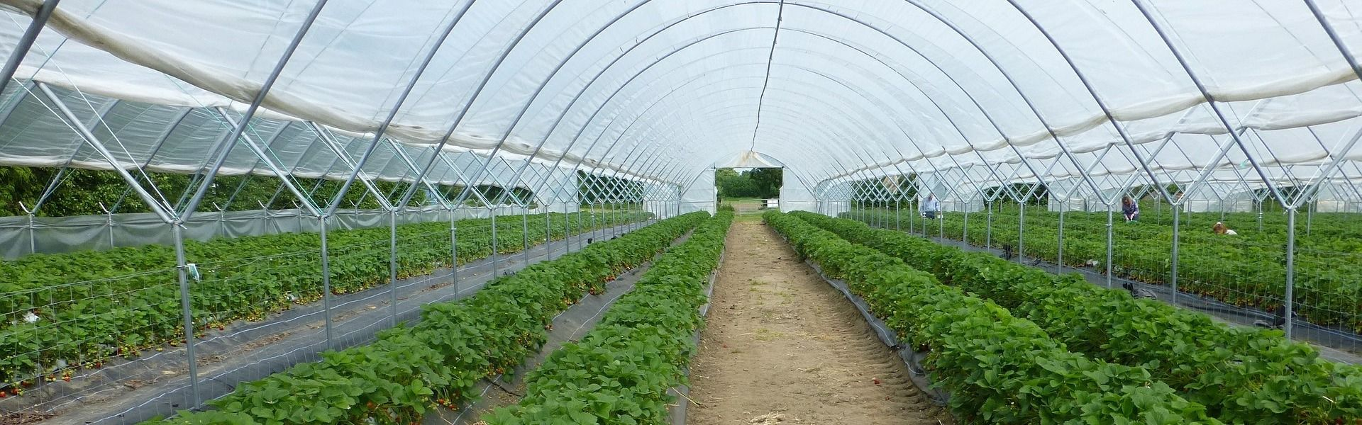 riscaldamento serre agricole ad alta efficienza